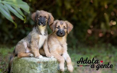 Volunteer photographic work for a dog shelter in São Paulo, Brazil.