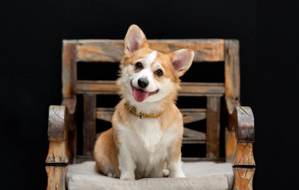 Commercial Dog photographer New York