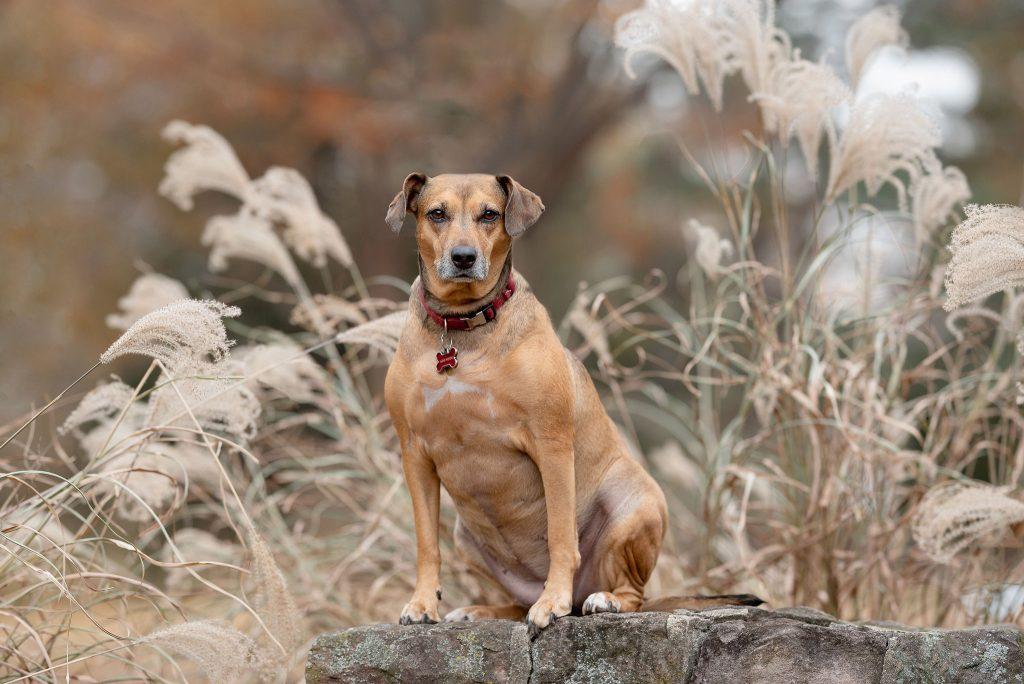 Pet Photographer in New York City