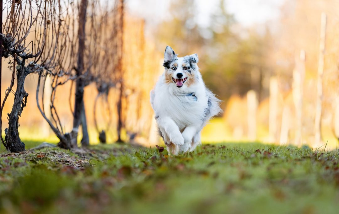 Dog photographer in new jersey, Alessandra Sawick