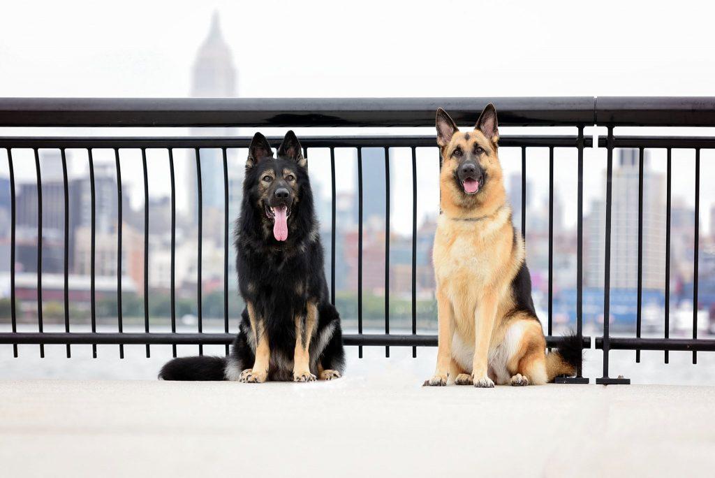 Dog Photography services Hoboken, NJ