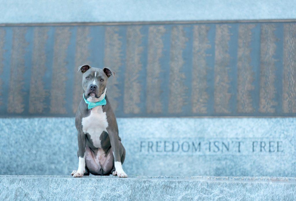 Dog Photography in Hoboken, NJ