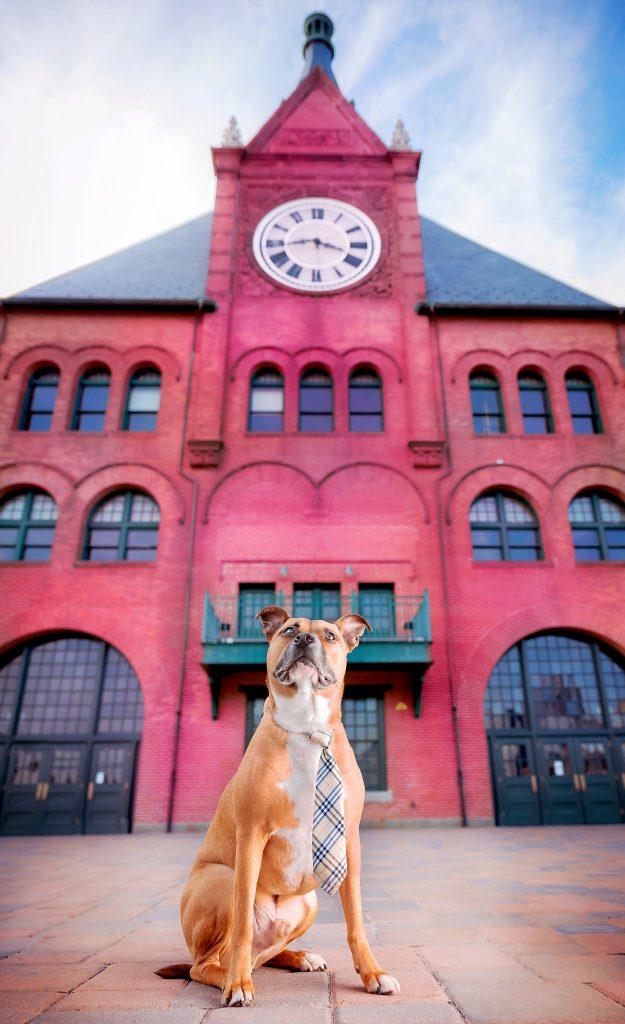 Pet Photographer in Jersey City NJ
