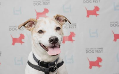 Dog Days of Summer Fest 2019