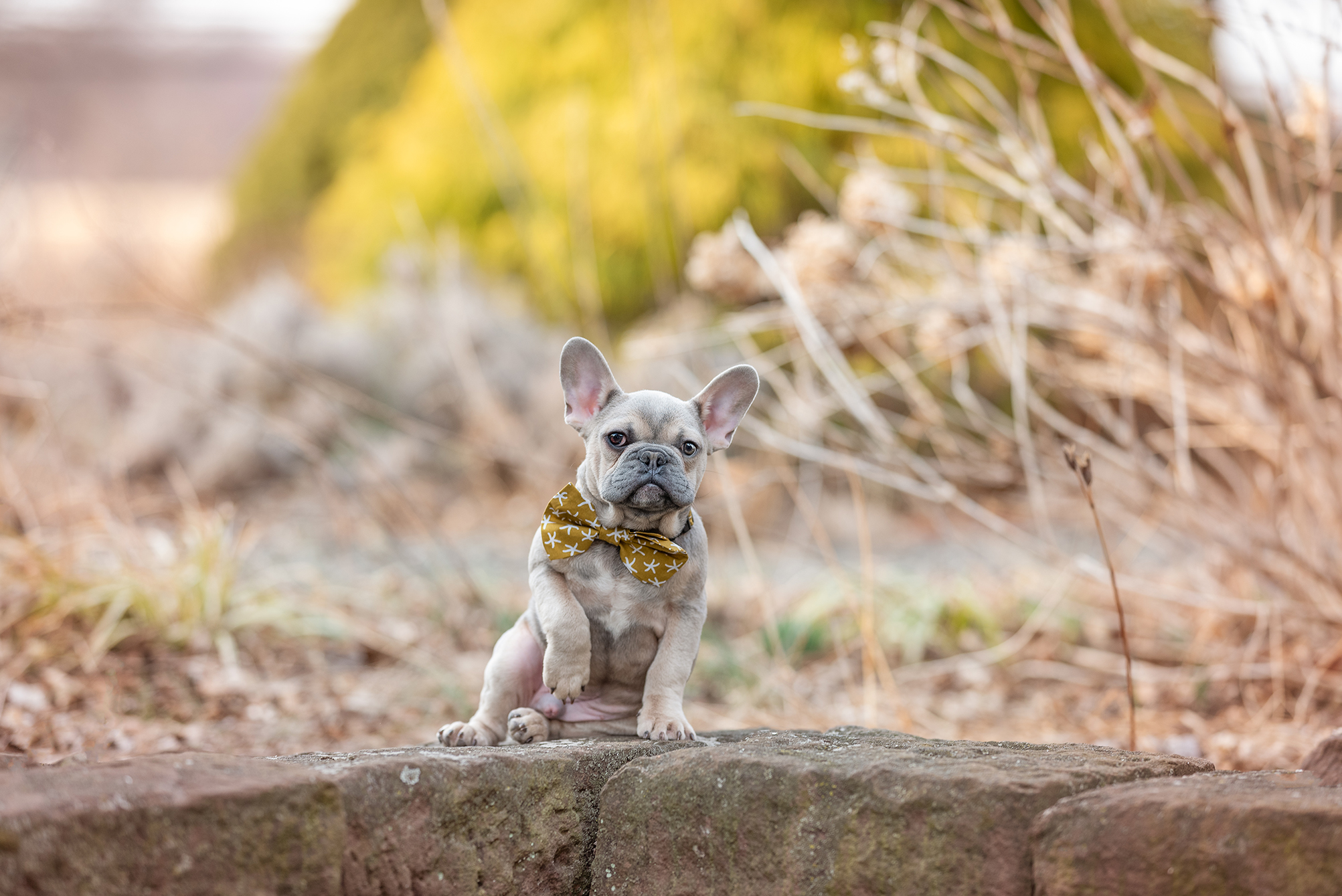 Pet and family photos in New York
