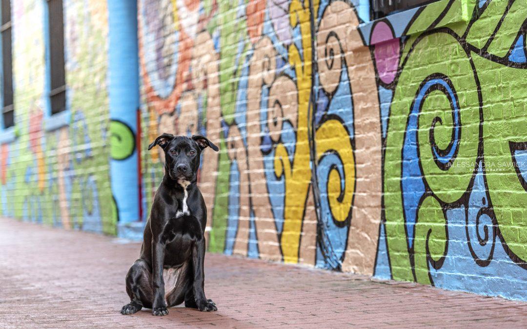 Adopt a Black  Dog!