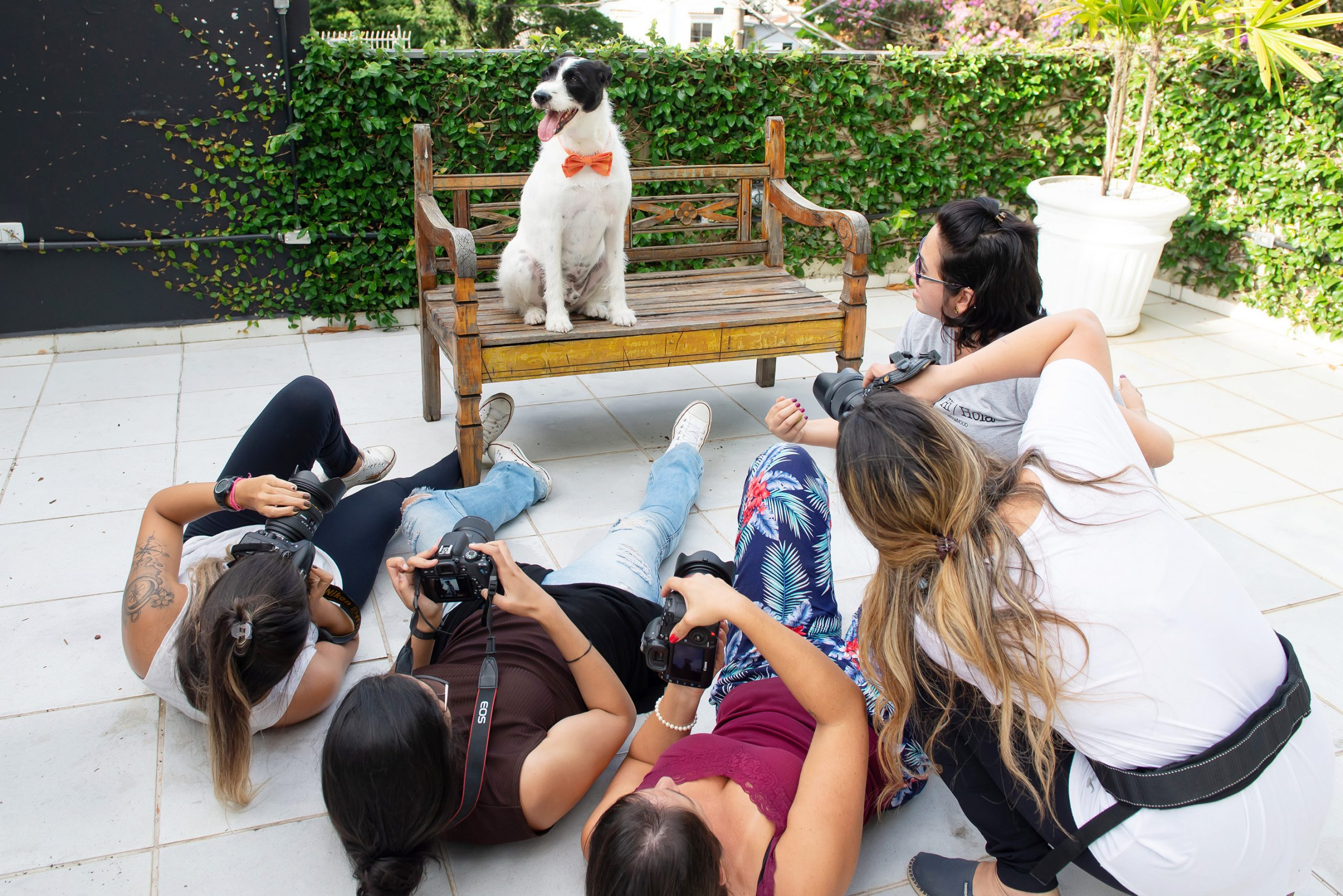 pet photography class in new york